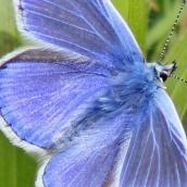 171224 blue (1)