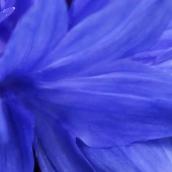 171224 blue (3)