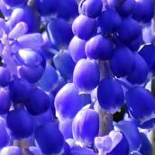171224 blue (7)