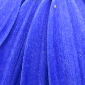 171224 blue (8)