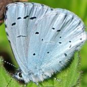 171224 blue (9)