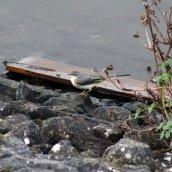 171230 Ely embankment (2)