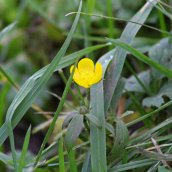 180102 New Year Plant Hunt (1)