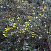 180102 New Year Plant Hunt (10)