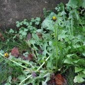 180102 New Year Plant Hunt (11)