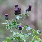 180102 New Year Plant Hunt (12)