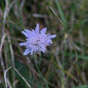 180102 New Year Plant Hunt (14)