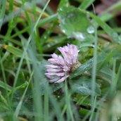 180102 New Year Plant Hunt (15)