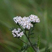 180102 New Year Plant Hunt (3)