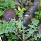 180102 New Year Plant Hunt (5)
