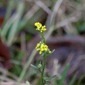 180102 New Year Plant Hunt (6)