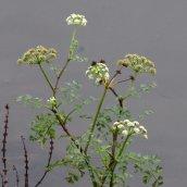 180102 New Year Plant Hunt (8)