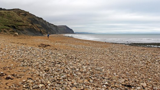 180106 Charmouth fossils (1)