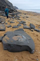 180106 Charmouth fossils (2)