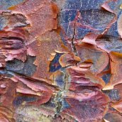 180111 tree bark (1)