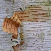 180111 tree bark (10)