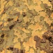 180111 tree bark (11)