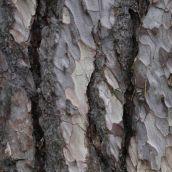 180111 tree bark (5)