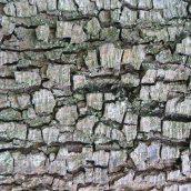 180111 tree bark (6)