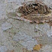 180111 tree bark (7)
