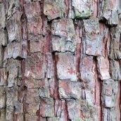 180111 tree bark (8)