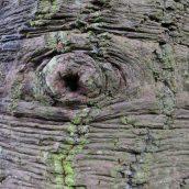 180111 tree bark (9)