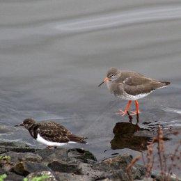 180130 Ely embankment birds (1)