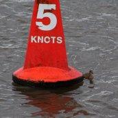 180130 Ely embankment birds (10)