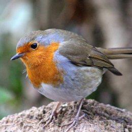 180201 6 Robin