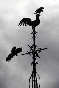 3 crow
