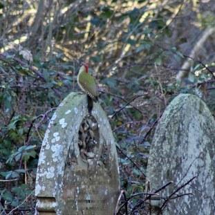 40 Green woodpecker