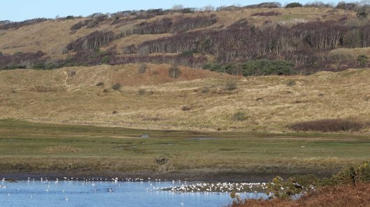 180211 Birding at Ogmore & Kenfig (10)