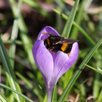 180224 bumblebee (1)