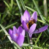 180224 bumblebee (2)