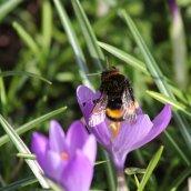 180224 bumblebee (3)