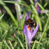 180224 bumblebee (4)