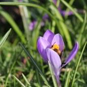 180224 bumblebee (5)