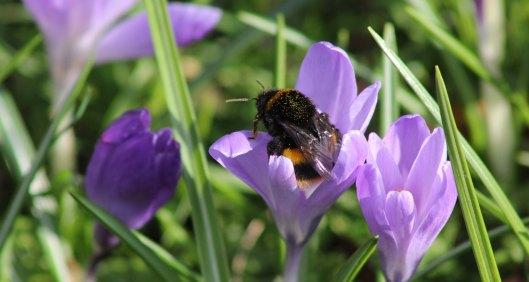 180224 bumblebee