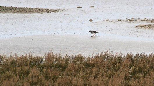 180227 Rye Harbour birds (1)