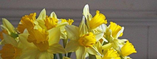 180301 daffodils (10)