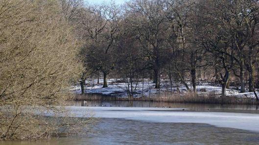 180310 Cannop Ponds (1)