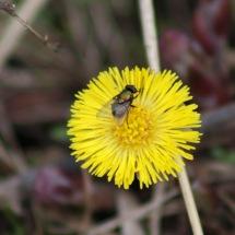 180401 minibeast (6) fly