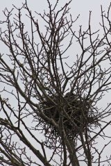 180409 crow