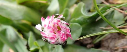 180422 daisy (1)