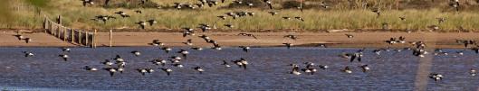 180416 ornithomancy (1)