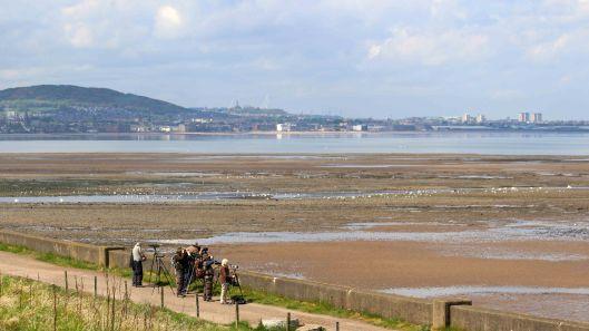 180512 Seawatching at Musselburgh