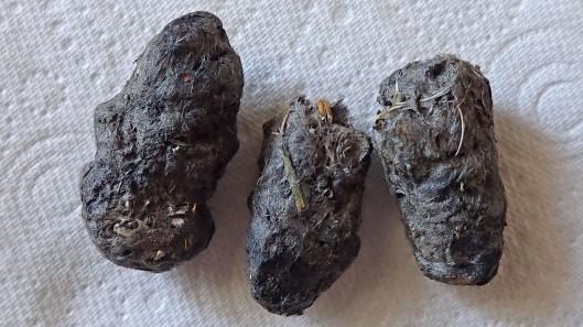 180529 owl pellets (2)