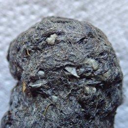 180529 owl pellets (5)