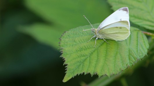 180601 (7) Small white