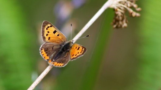 180608 1 Small copper